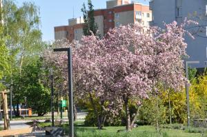 Botanic Garden Apartment