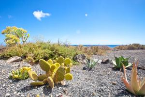 Luxe Punta Mujeres Sea Views!, Apartments  Punta de Mujeres - big - 17
