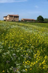 Casale Sterpeti, Panziók  Magliano in Toscana - big - 28