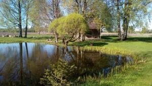 Brīvdienu māja Bienes, Дома для отпуска  Сабиле - big - 43
