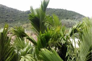 Tiandu Rainforest Resort, Курортные отели  Санья - big - 22