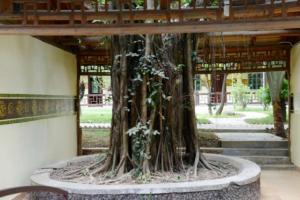 Tiandu Rainforest Resort, Курортные отели  Санья - big - 19