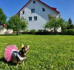 Mini Hotel Furmi, Inns  Skhidnitsa - big - 49