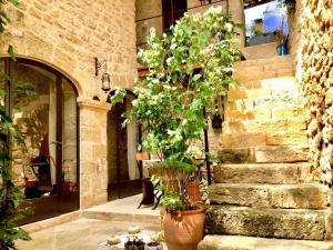 Location gîte, chambres d'hotes Un Patio en Luberon dans le département Vaucluse 84
