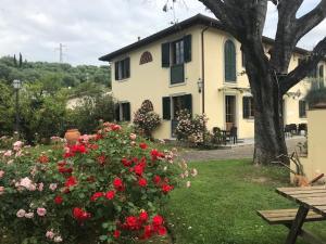 Residence Prunali, Residence  Massarosa - big - 41