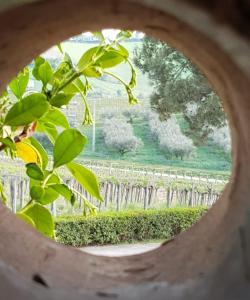 Masseria del Vino - AbcAlberghi.com
