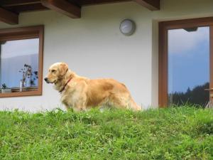 Il Cardo Trentino - Apartment - Bedollo
