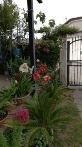 Casa vacanze Molly - AbcAlberghi.com
