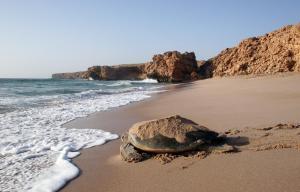 Ras Al Jinz Turtle Reserve (2 of 30)