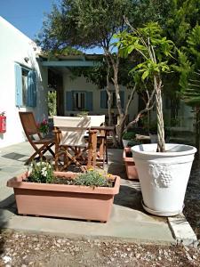 Sourmeli Garden Hotel, Hotel  Città di Mykonos - big - 8