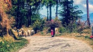 Suket homestay, Проживание в семье  Karsog - big - 44