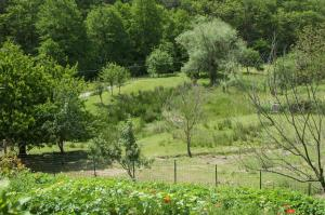 Affittacamere Graziella, Guest houses  Vernazza - big - 40