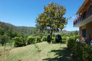 Affittacamere Graziella, Guest houses  Vernazza - big - 49