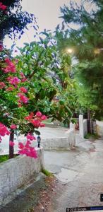 Kato Agios Petros Andros Greece