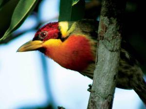 Inkaterra Reserva Amazonica (38 of 48)