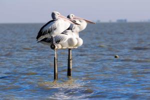 Hostels und Jugendherbergen - Pelican Perch Retreat