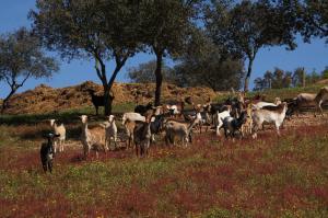 Cantar Do Grilo - Turismo Rural, Vendégházak  Vales Mortos - big - 42