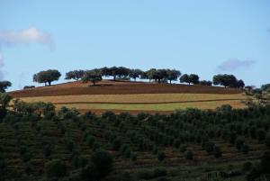 Cantar Do Grilo - Turismo Rural, Penzióny  Vales Mortos - big - 24