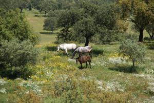 Cantar Do Grilo - Turismo Rural, Penzióny  Vales Mortos - big - 25