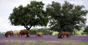 Cantar Do Grilo - Turismo Rural, Penzióny  Vales Mortos - big - 21