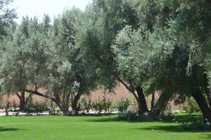Riad le Jasmin, Riads  Taroudant - big - 42