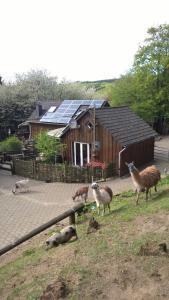 Funny-Farm - Kelberg