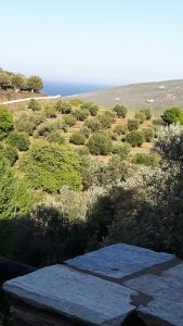 Green Oasis 2 Andros Greece