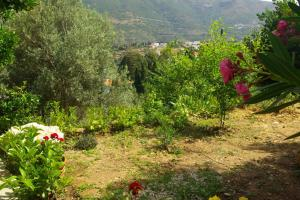 Green Oasis 3 Andros Greece