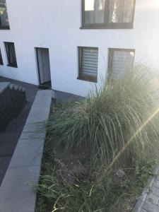 obrázek - Ferienwohnung Schiller