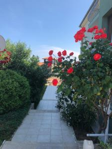 Gardenia Vacation Settlement, Apartmanhotelek  Szozopol - big - 76