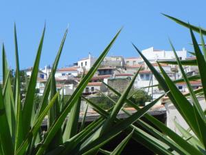 Villa Laura - Alonissos Alonissos Greece