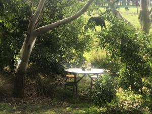 Phillip Island Nature Resort, Vily  Cowes - big - 50