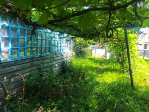 Agrosadiba - Vilkhove