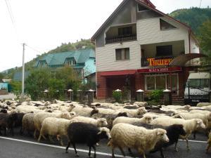 Тушер - Hotel - Rakhiv