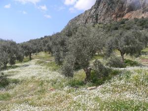 Natureland Efes Pension, Residence  Selçuk - big - 83