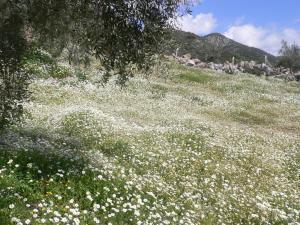 Natureland Efes Pension, Residence  Selçuk - big - 23