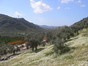 Natureland Efes Pension, Residence  Selçuk - big - 17