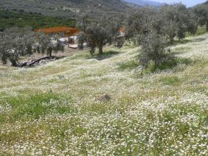 Natureland Efes Pension, Residence  Selçuk - big - 46