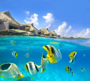 Conrad Bora Bora Nui (33 of 118)