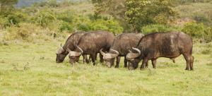 Lalibela Game Reserve (21 of 184)
