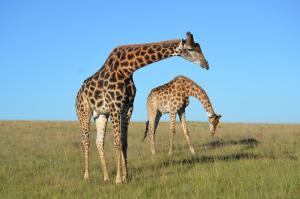 Lalibela Game Reserve (37 of 184)