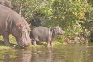 Lalibela Game Reserve (15 of 184)