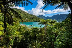 obrázek - Punga Cove Resort