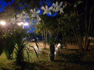 Hotel Royal Park, Hotely  Anurádhapura - big - 8