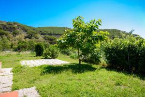 Villino Rita, Ferienwohnungen  Portoferraio - big - 17