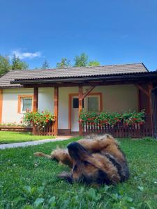 Rooms Family Glumac, Guest houses  Jezerce - big - 18