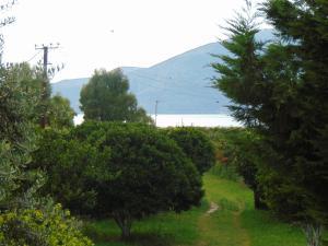 Garden Vila Jako - Radhimë