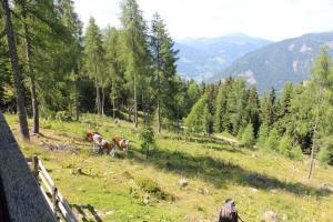 Neuwirth Hütte, Дома для отпуска  Гнезау - big - 10