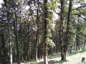 Suket homestay, Проживание в семье  Karsog - big - 51