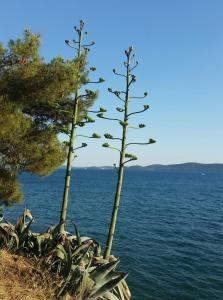 Green Hostel - Zadar